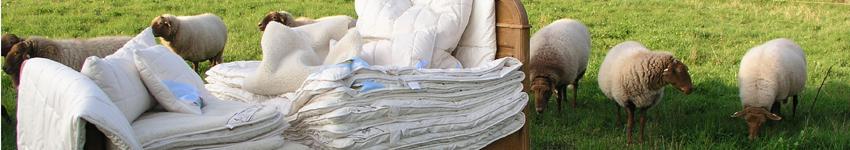 Steppdecken, Unterbetten und Kissen aus Schurwolle aus kontrolliert biologischer Tierhaltung